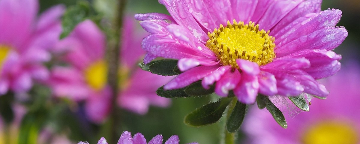 flowers-918537_1920
