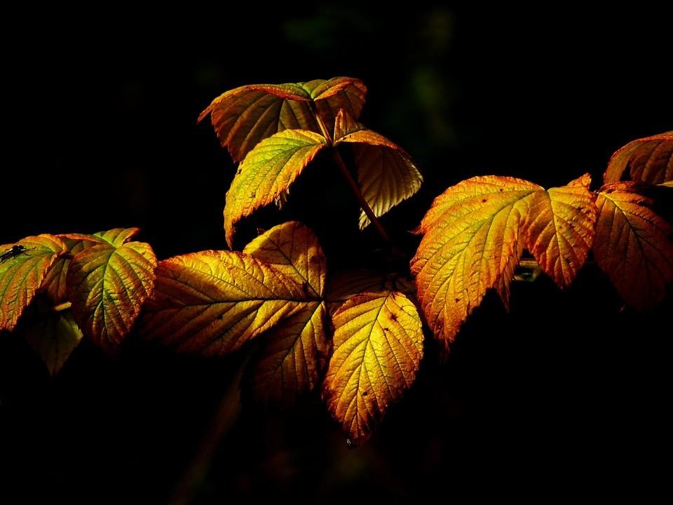autumn-437769_960_720