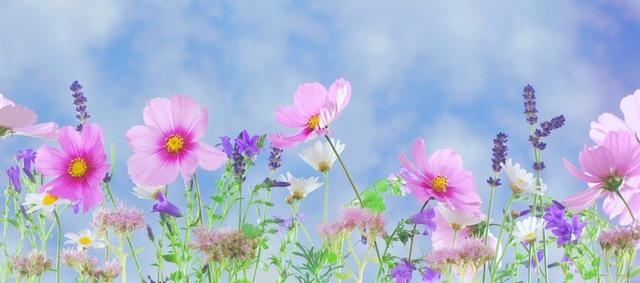 wild-flowers-flowers-plant-macro-40797