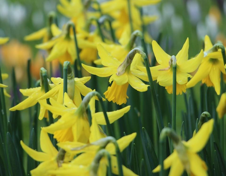 spring-1209086_1280
