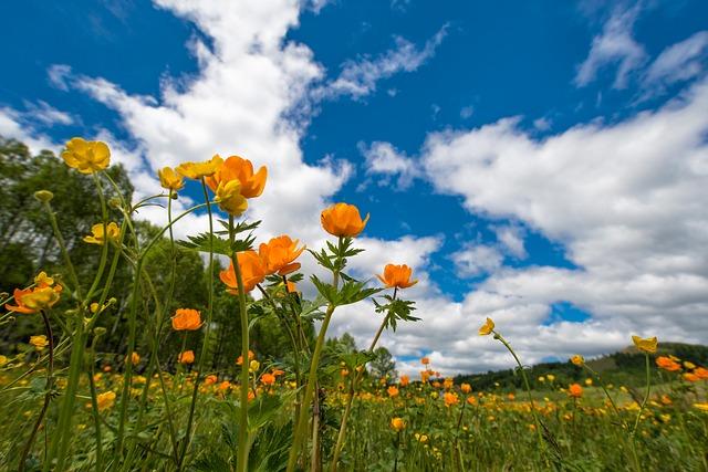 spring-2184004_640